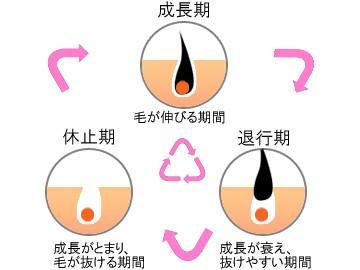 医療レーザー脱毛をより効果的にするために毛周期が重要